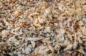 Leaves on the floor — Stock Photo