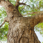 Tree branch — Stock Photo