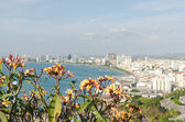 Frangipani with a view of the city — Photo