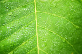 Water drops on green leaf macro background. — Stock Photo
