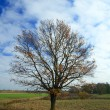 Tree in field — Stock Photo #37110821