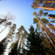 Sky in a forest — Stock Photo