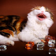 Kitten playing with glass cubes — Stock Photo