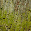 Stock Photo: Natural bark texture