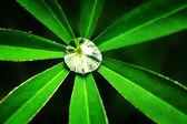 Dew on a green leaf — Stock Photo