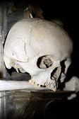 Skull — Стоковое фото