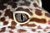 Lizard eye — Stock Photo
