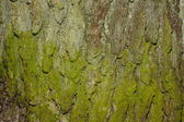 Natural bark texture — Stock Photo