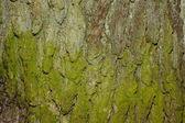Natural bark texture — Stock Photo