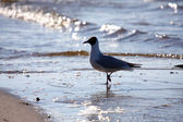 Seagull — Stockfoto