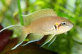 鱼 — 图库照片