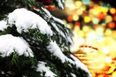 Spruce brach with snow — Stock Photo