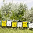 Bee hives in summer — Stock Photo