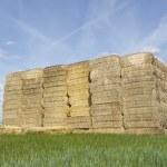 Straw bales — Stock Photo #48313727