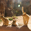 Cats standing proudly — Stock Photo #37223127