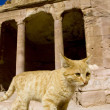 Cat ancient temple in Petra, Jordan. — Stock Photo