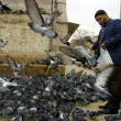 Elder man feeding the pigeons — Stock Photo