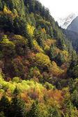 Autumn Forrest — Stock Photo
