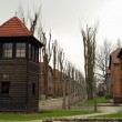 Auschwitz concentration camp — Stock Photo #37409365