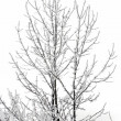 Frozen branches of trees — Stock Photo #37429763