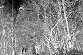 Arbres congelés — Photo