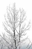 Frozen branches of a trees — Stock Photo