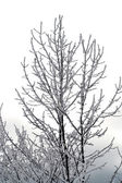 Frozen trees — Stockfoto