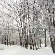 Frozen branches of trees — Stock Photo #37430265
