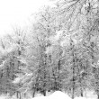 Frozen branches of trees — Stock Photo #37430357
