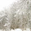 Frozen branches of trees — Stock Photo #37430473