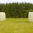 Field with hay rolls — Stock Photo