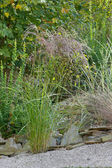 Ornamental grasses — Stock Photo
