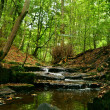 Stock Photo: Woodland water