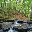 Stockfoto: Woodland water