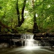 Foto Stock: Woodland water