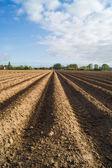 Open farmland in Doetinchem, Holland, Netherlands. — Stock Photo