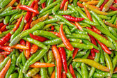 Red and green hot peppers — Stock Photo