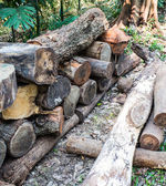 Cut tree — Stock Photo