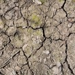 Dry earth — Stock Photo #38822043