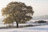 Lone Tree in the Snow — Stock Photo