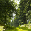 Sunny Forest Path — Stock Photo #38600523