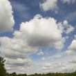 Clouds and Trees — Stock Photo #38600693