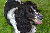 Hund und garten — Stockfoto