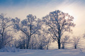 Winter landscape with white trees covered with frost — Stock Photo