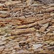 Rotten wood texture — Stock Photo