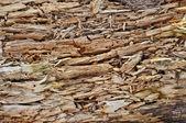 Rotten wood texture — Stock Photo