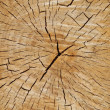 Cutted tree trunk wood texture — Stock Photo