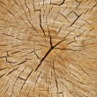 Cutted tree trunk wood texture — Stock Photo #37561657