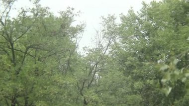 Summer snowboarding flying man summersault, trees background — Stock Video