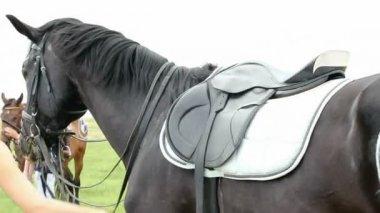 Horse with saddle and BMW logo — Стоковое видео